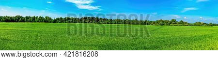 Green Agricultural Field Of Winter Crops On A Background Of Blue Sky. Agricultural Business. Farm Fi