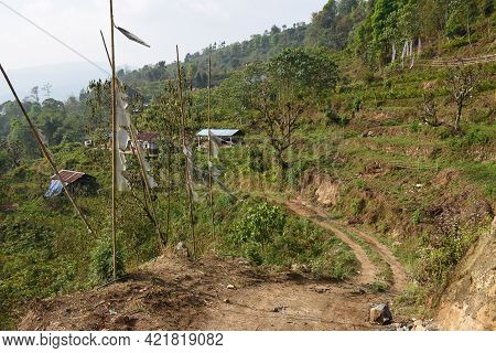 Remote Village With Cultivation Of Amomum Subulatum Commonly Known As Large Cardamom, In Todey ,kali