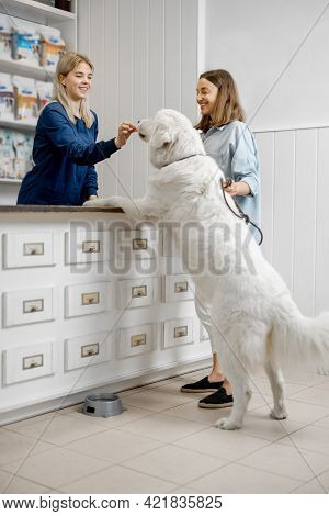 Female Owner With Big White Dog On Reception In Veterinary Clinic While Assistant Gives A Treat To P