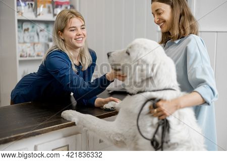 Female Owner And Veterinarian With Big White Dog On Reception In Veterinary Clinic. Dog Climbed Paws