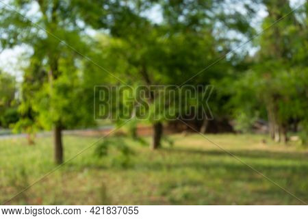 Blurred Background Of A City Park. Natural Green Summer Background. Abstract Defocused Landscape Tre