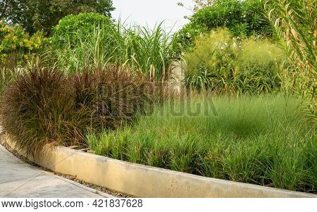 Garden Of Various Types Of Grass And Turf In Sand Wash Finished Container In The Park