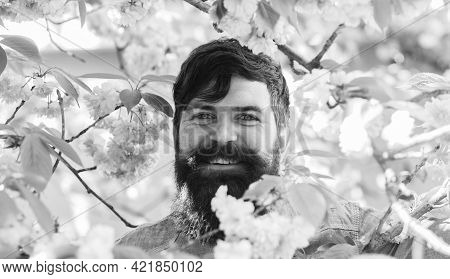 Hipster Near Blossoming Of Sakura. Spring Sakura Bloom. Happy Easter. Brutal Mature Hipster In Cherr