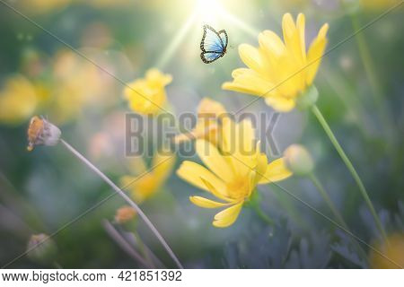 World Environment Day Concept: Flowers And Butterfly In A Meadow In Nature Of Sunlight In Summer In