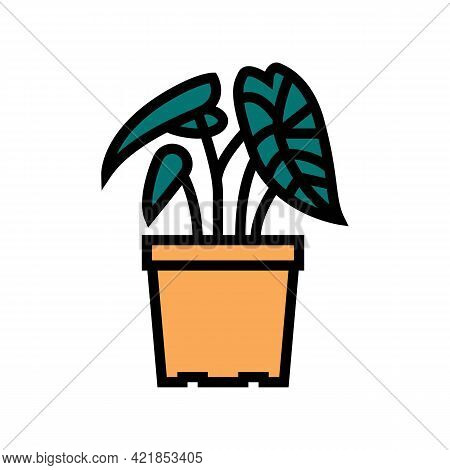 Tropical Houseplant Color Icon Vector. Tropical Houseplant Sign. Isolated Symbol Illustration