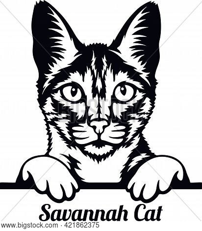Savannah Cat - Cat Breed. Cat Breed Head Isolated On A White Background