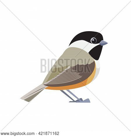 Black-capped Chickadee Is A Small, Songbird. It Is A Passerine Bird In The Tit Family. Cartoon Flat