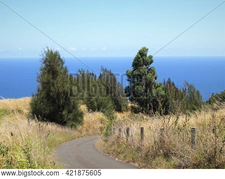 A Cluster Of Trees In A Grassy Field Along A Road With The Ocean And Sky In The Backround
