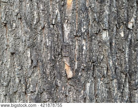 Bark Texture And Background Of A Old Tree Trunk. Detailed Bark Texture. Natural Background