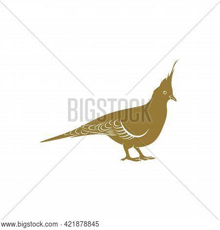 Crested Pigeon Bird Vector Illustration. Crested Pigeon Bird Logo Design Concept Template. Creative