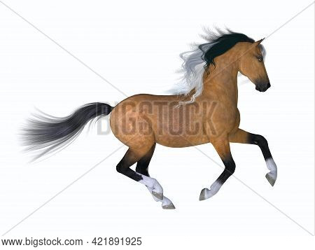 Buckskin Quarter Horse 3d Illustration - The Quarter Horse Is A Distinctive Breed Developed In The A