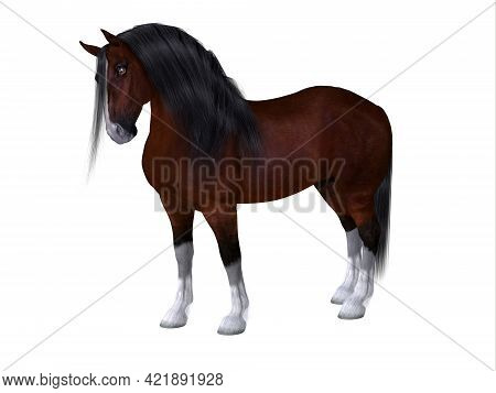 Clydesdale Horse 3d Illustration - The Clydesdale Is A Distinctive Breed Of Horse Developed In Scotl