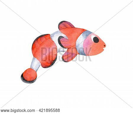 Hand-painted Watercolor Illustration Of Seafish - Clownfish Or Anemonefish Isolated On White Backgro