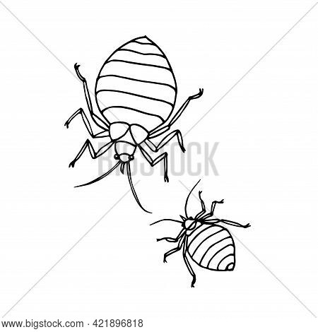 A Pair Of Bed Bugs, Beetle, Parasite Insect, Symbol Of Insanitary, Vector Illustration With Black In
