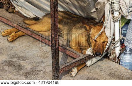 Dog Sleeps Under The Table. Ring Road, Gaucharan, Kathmandu, Nepal.