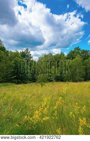 Forest On The Grassy Hillside Meadow. Mountain Landscape On A Cloudy Summer Day