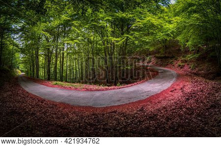 Spectacular Horse Shoe Curved Road Inside Beech Forest