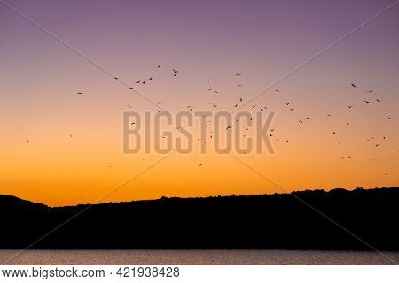 Flock Of Birds Migrating On Picturesque Orange And Purple Sky After Sunset, Seen In A Bay On Rineja