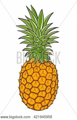Crested Pineapple, Vector. Whole Tropical Exotic Fruits. Colored Plucked Fruit Of The Grass. Delicio