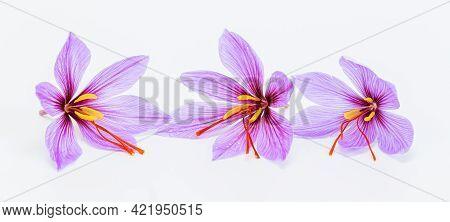Saffron. Three Saffron Flowers On A White Background.
