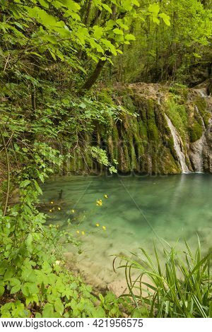 View Of Natural Pool In The Wild Forest