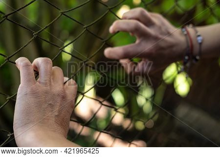 Women Hands Tensely And Anxiously Hold On To The Metal Mesh Of The Fence. Stress And Freedom Concept
