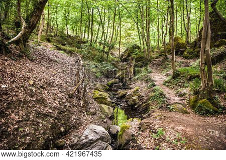 A stream that murmurs merrily through the freshly leafy forest. Bosnia and Herzegovina.