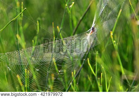 Spider Web On Branches And Leaves Of Green Plants In A City Park In Israel