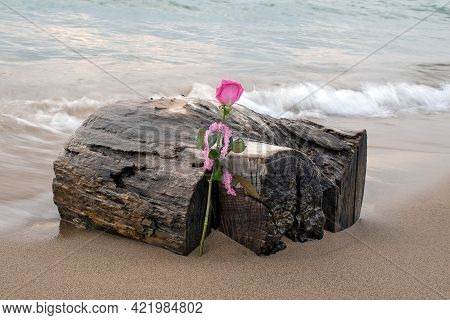 Pink Rose With Ruffled Gingham Ribbon Leaning On Wet Driftwood In Beach Sand