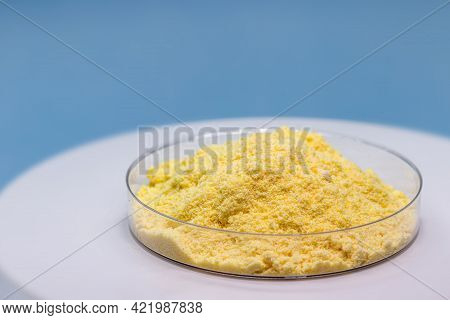 Sulfur Powder In Petri Dish, Chemical Substance For Industrial Use, Isolated Blue Background