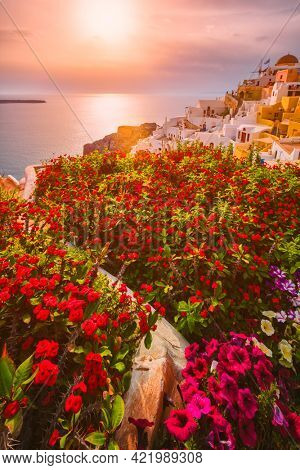 Scenic sunset over sea and picturesque Oia town on Santorini island in summer with red flowers on foreground