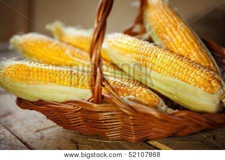 Maize husked