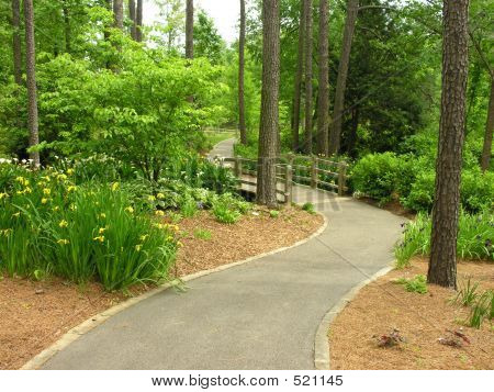 Lovely Nature Walkway