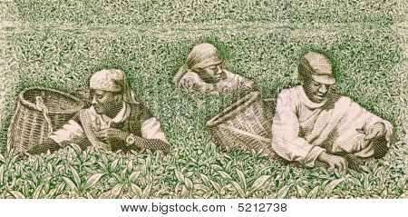 Farmers picking tea on 500 francs banknote from Rwanda poster