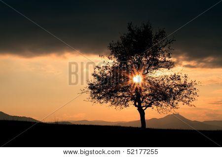 Sun Over The Tree