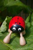a novelty ladybug massager resting on a giant rhubarb leaf poster