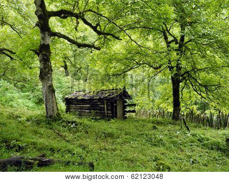 The old cabin in the wood