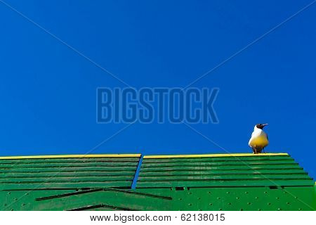 Seagull Sitting On Frerry Roof Against Blue Cloudless Sky.