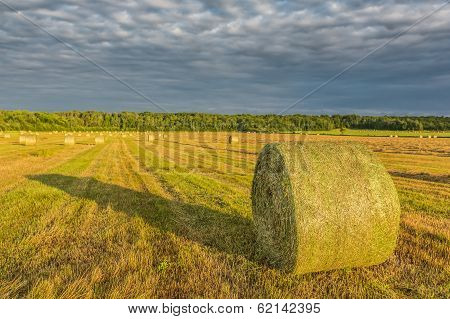 Yellow Hay In A Field