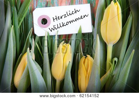 Tulip Background With Herzlich Willkommen
