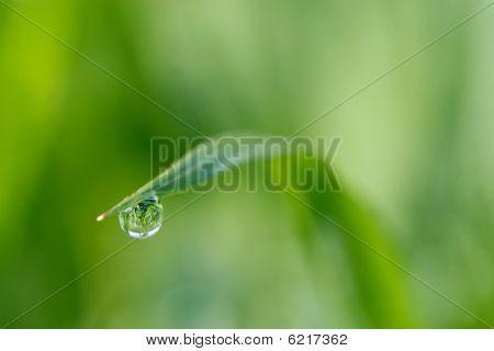Close-up Rain Drop
