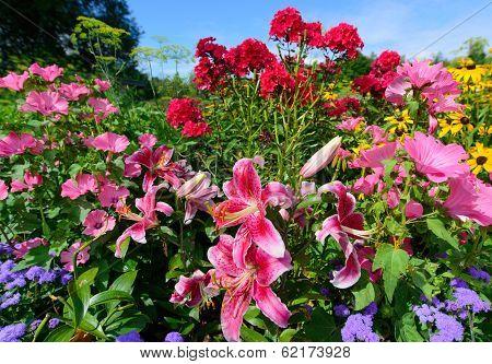 Perennial Flowers - Horizontal