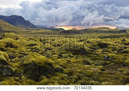 Surreal Landscape With Wooly Moss At Sunset In Iceland
