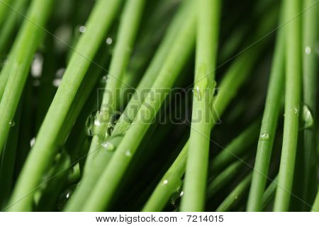 Fresh Green Onion Leaves