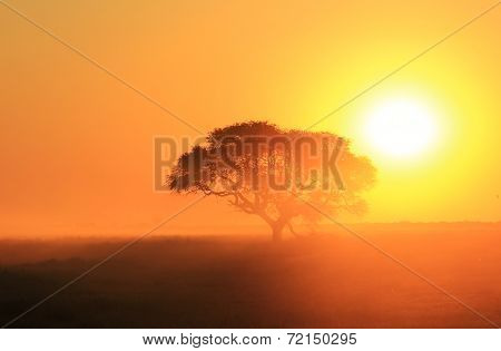 Sunset Gold - African Beauty of Color and Peace