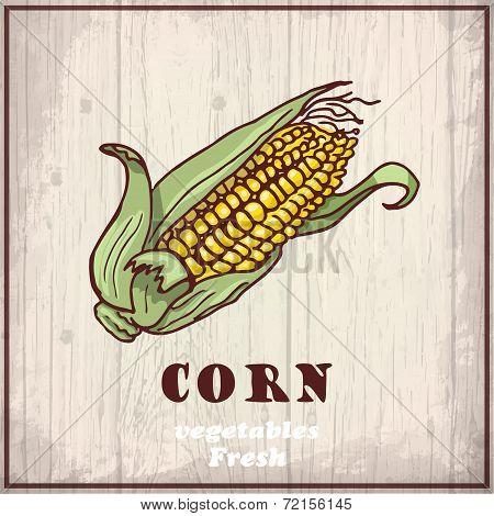 Fresh vegetables sketch background. Vintage hand drawing illustration of a corn