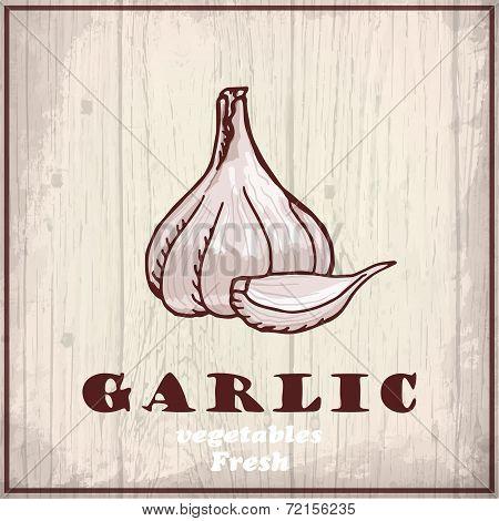 Fresh vegetables sketch background. Vintage hand drawing illustration of a garlic