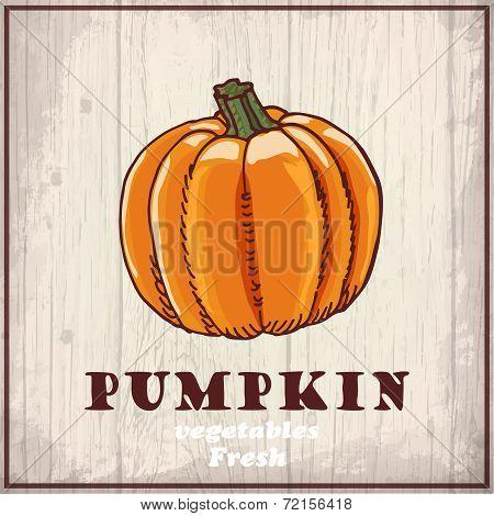 Fresh vegetables sketch background. Vintage hand drawing illustration of a pumpkin