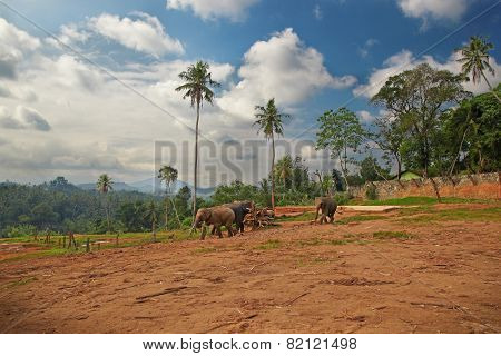 Outskirts Of The Indian Village