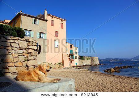 St. Tropez Beach Dog